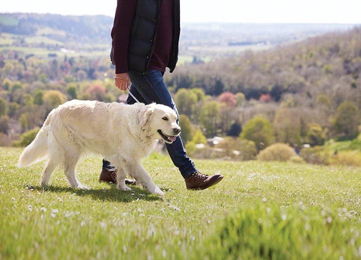 Be Nice. Be You. Man walking dog
